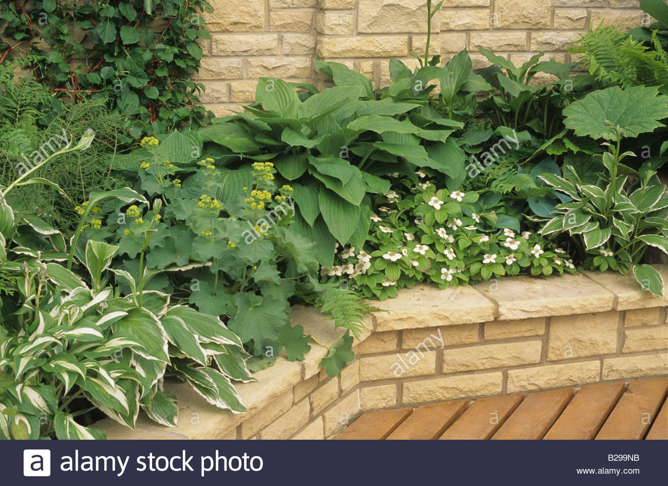 Schattenliebende Pflanzen chelsea fs 1992 erhaben bett in einer schattigen ecke des einen