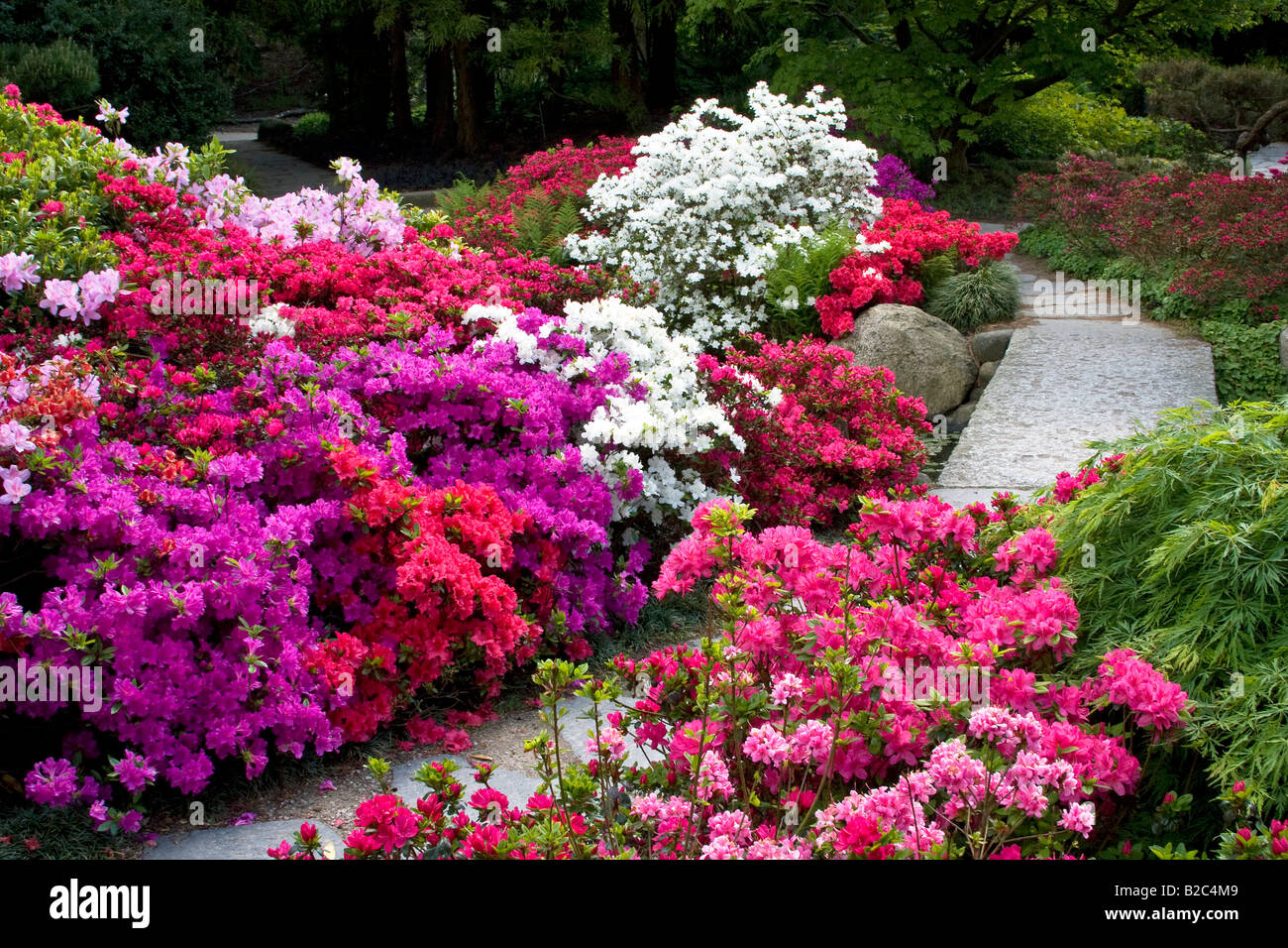 rhododendrons stockfotos rhododendrons bilder alamy. Black Bedroom Furniture Sets. Home Design Ideas