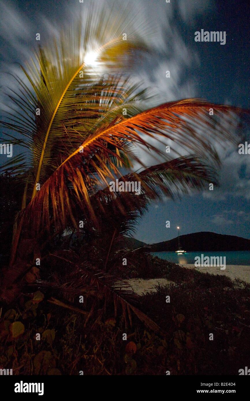 Palmen wiegen sich in der Nachtwind auf Sandy Spieß eine kleine Insel in den British Virgin Islands. Stockbild