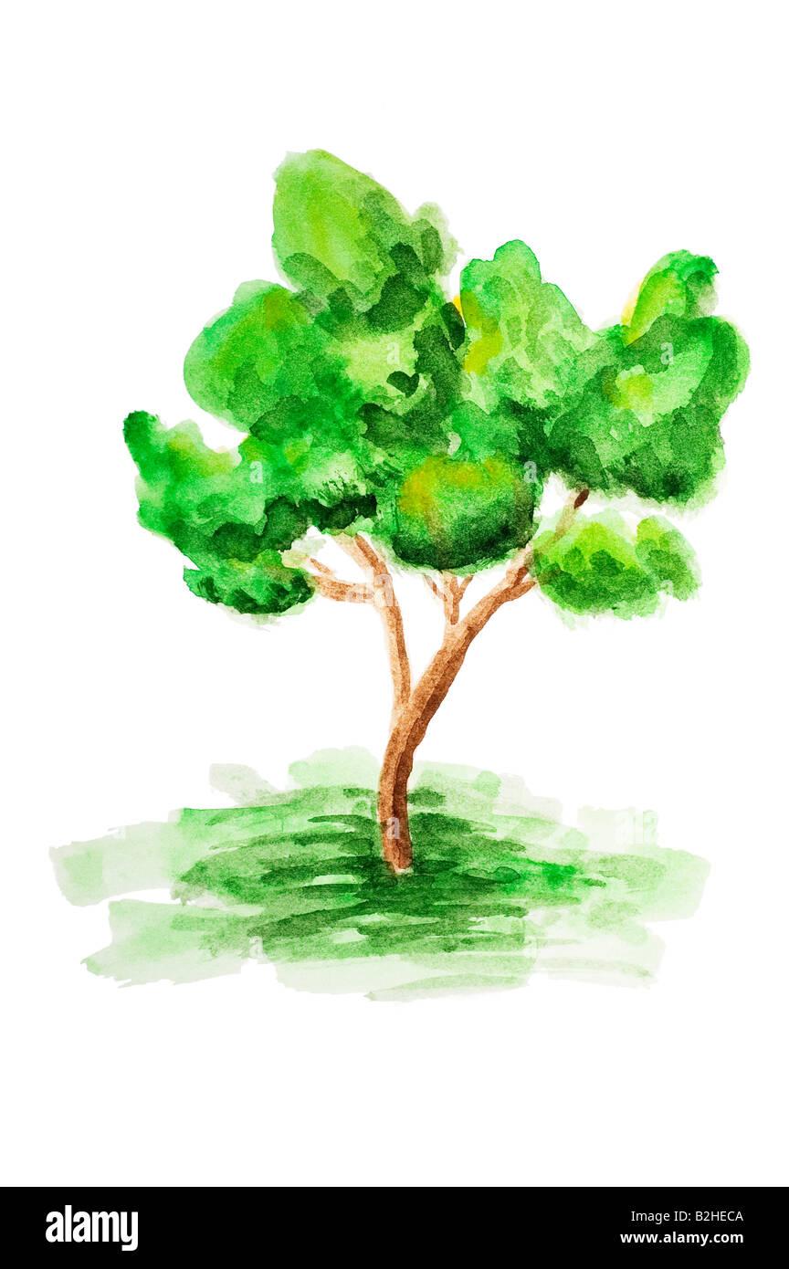 Aquarell Gemalt Baum Stockfoto Bild 18824186 Alamy