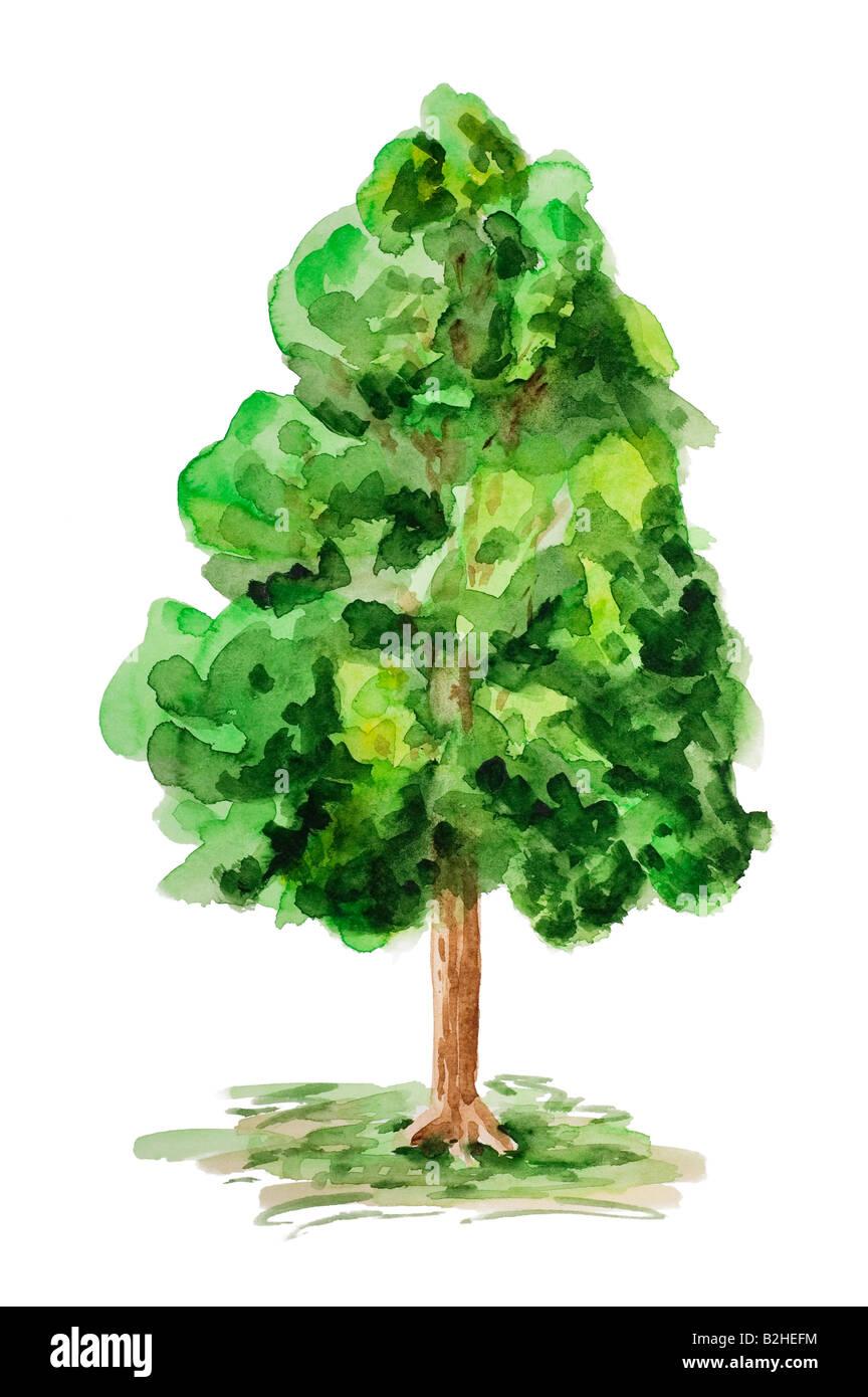 Aquarell Gemalt Baum Stockfoto Bild 18824280 Alamy