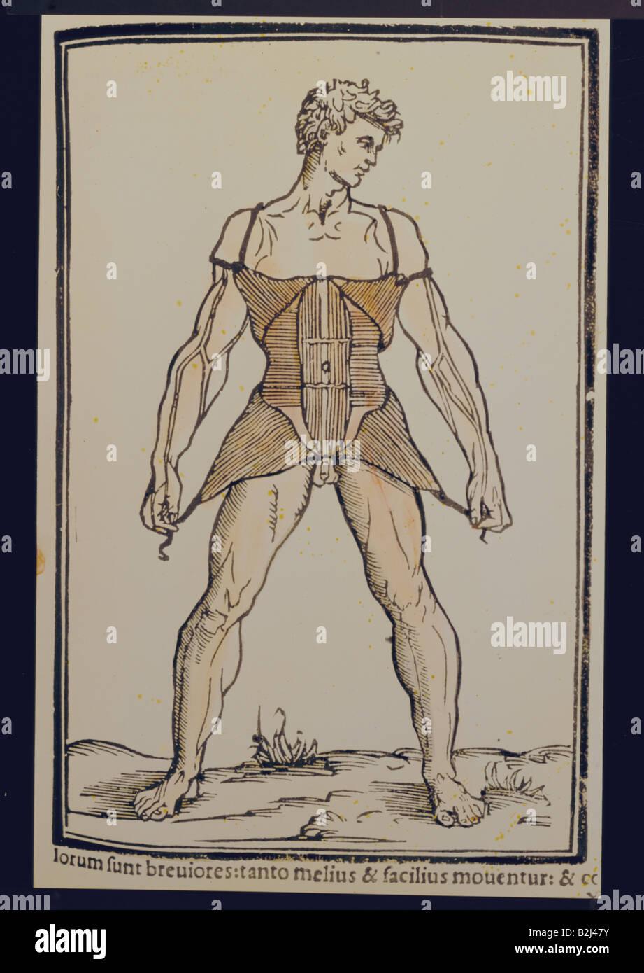 Mediciane, Anatomie, Muskeln, abdorminal Muskeln, farbige Holzstich ...