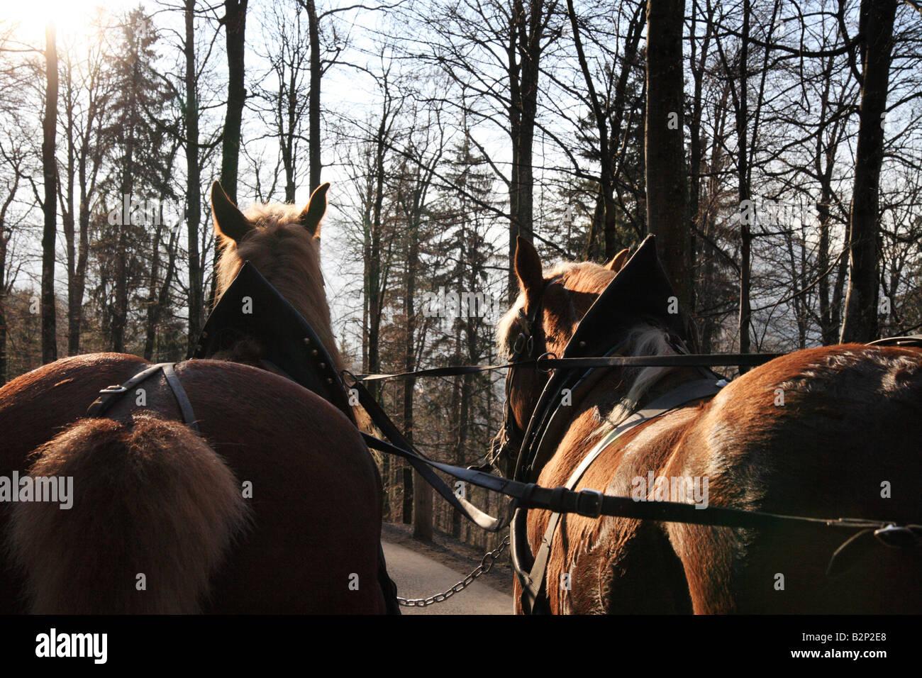 Pferdekutsche Schloss Neuschwanstein Stockfotos Und Bilder Kaufen Alamy
