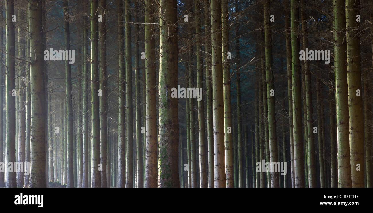 Eine Kiefer Holz Einzäunung in Exmoor National Park Devon England Stockbild
