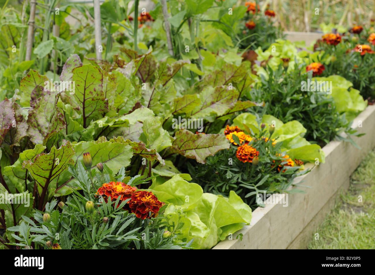 Blumen Und Gemuse In Einem Hochbeet Auch Ringelblumen Honeycombe