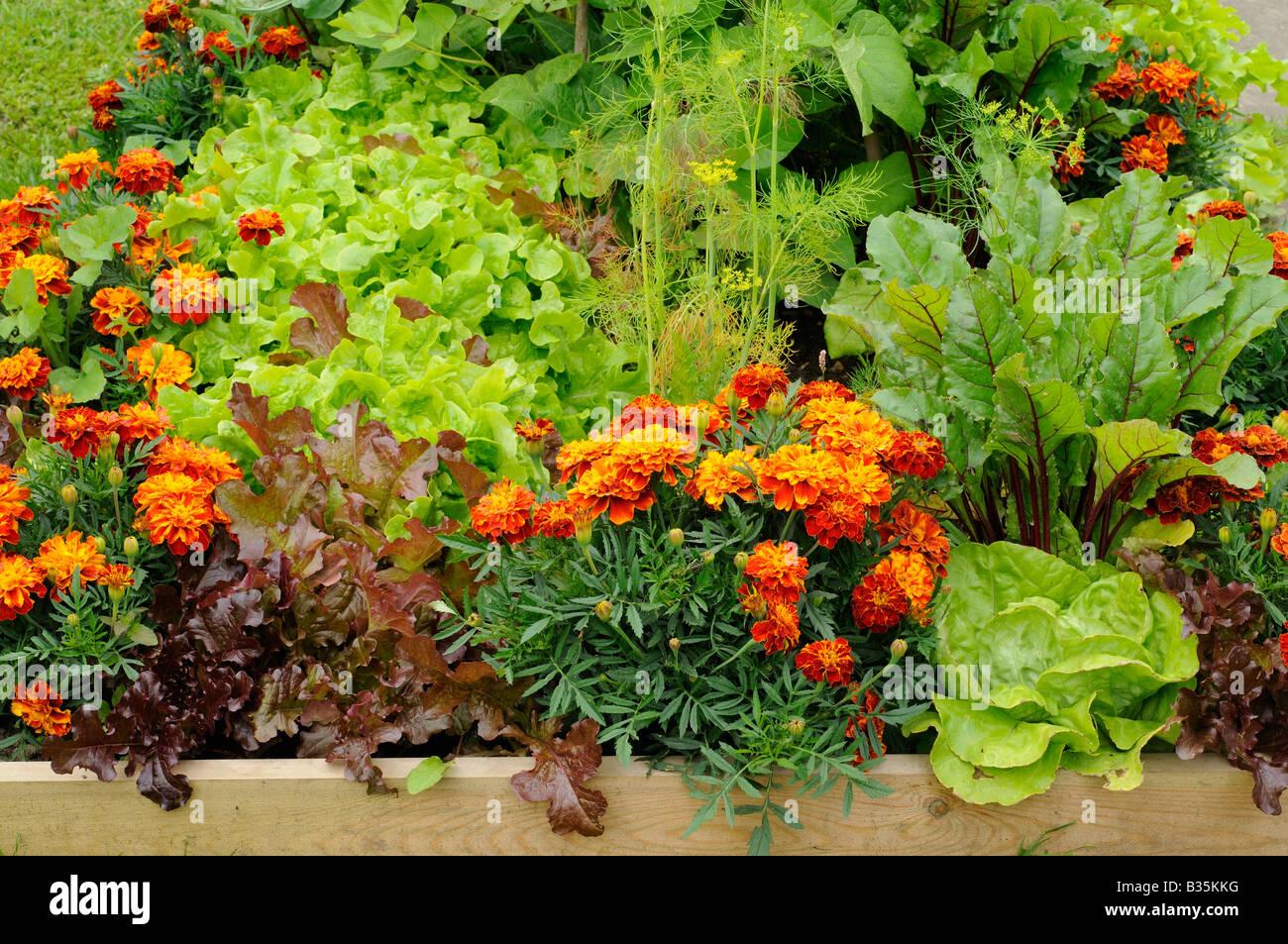 Sommergarten Mit Verschiedenem Gemuse Und Blumen Hochbeete Uk Juni