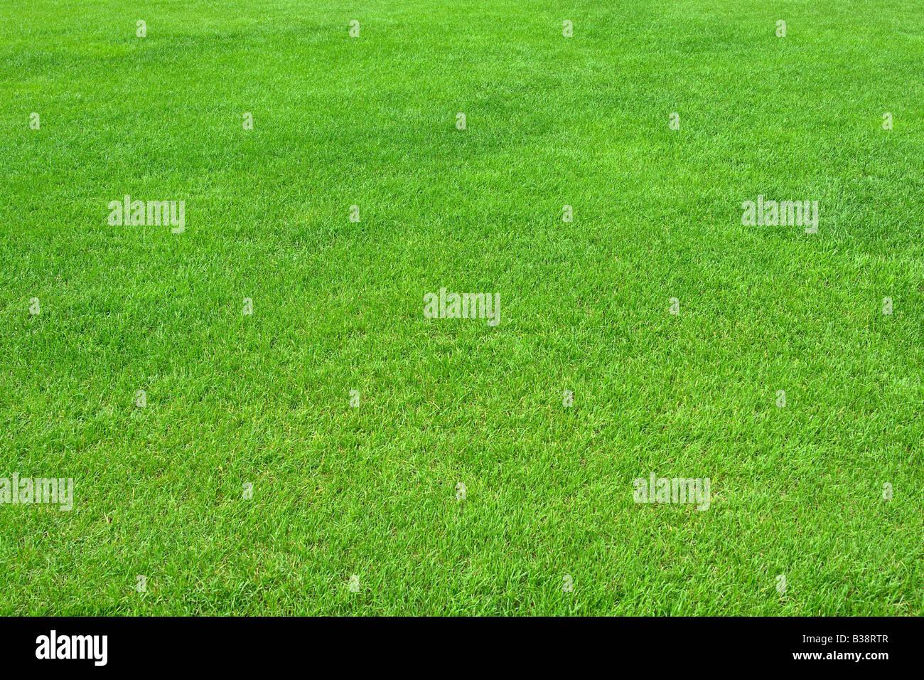 Reine leere grüne Wiese horizontal geschnitten Stockbild