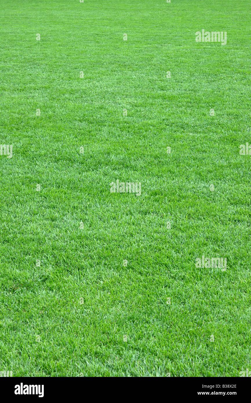 Reine leere grüne Wiese schneiden vertikal Stockbild