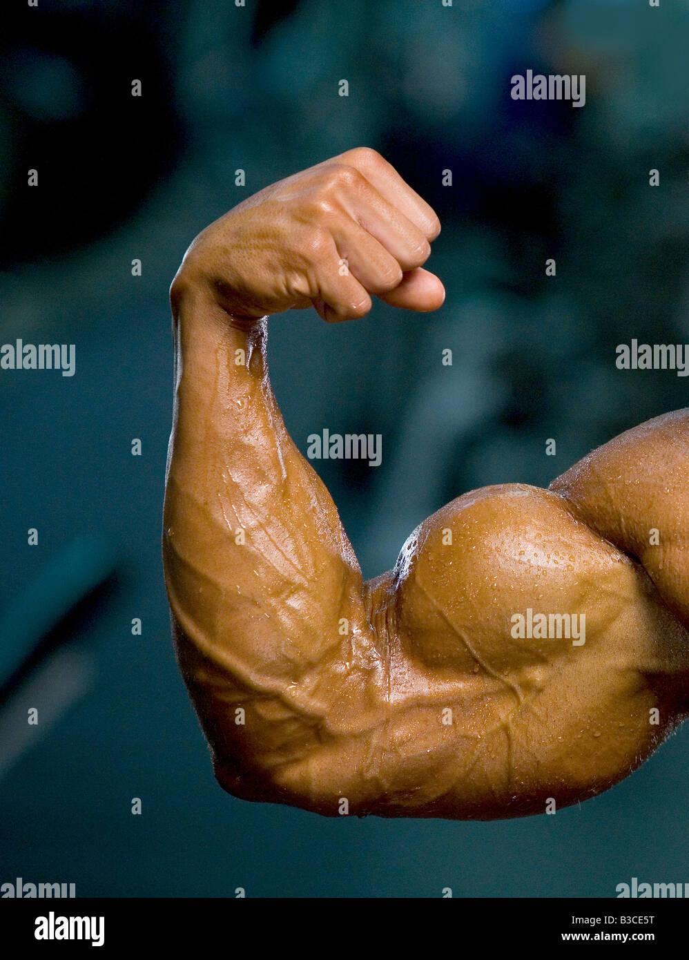 Bodybuilder Bodybuilder muskulösen Arm Bizeps Bizeps Faust Muskel ...