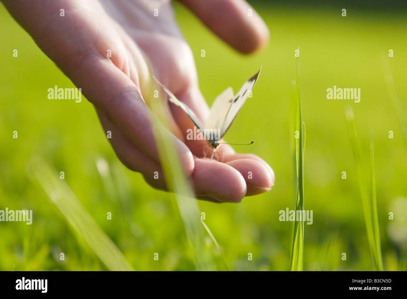 Schmetterling auf der Hand des Mannes, Nahaufnahme Stockbild
