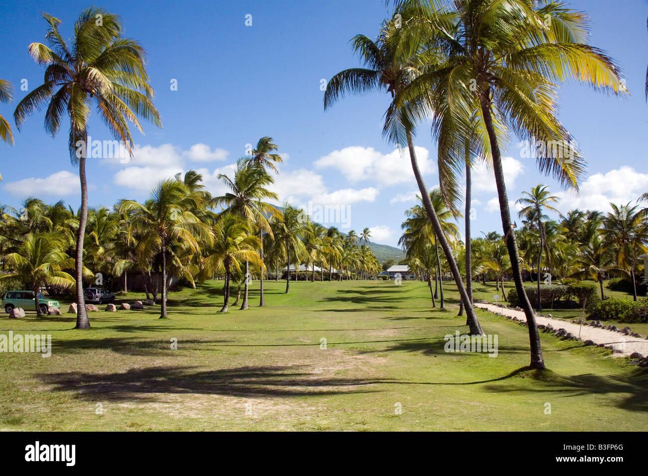 Nisbet Plantation Hotelgarten mit Kokospalmen am Nevis Karibik Stockbild