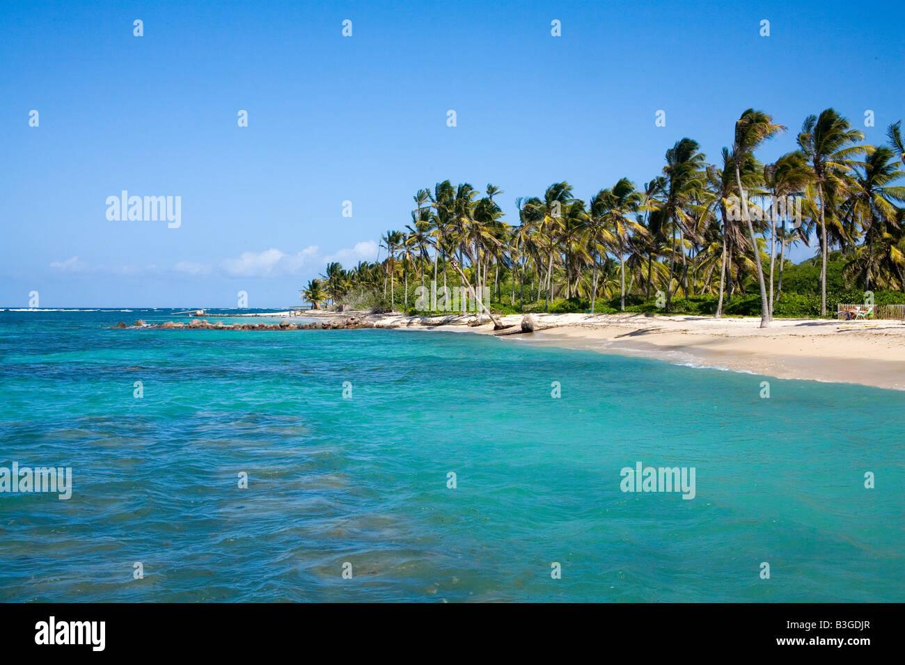 Herrlichen Sandstrand mit Kokospalmen am Nevis Karibik Stockbild