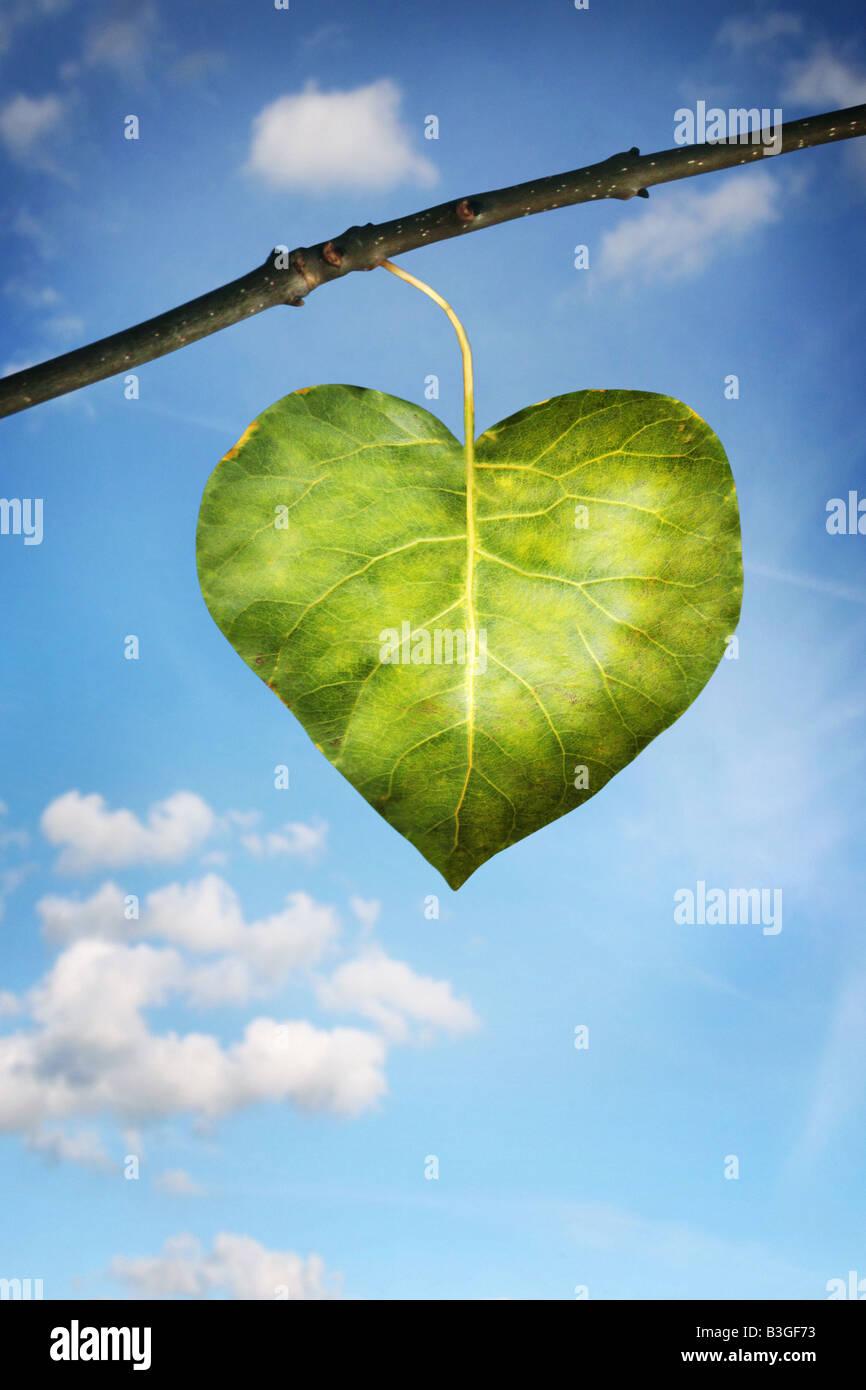 einzelnes Blatt in der Form eines Herzens Stockfoto