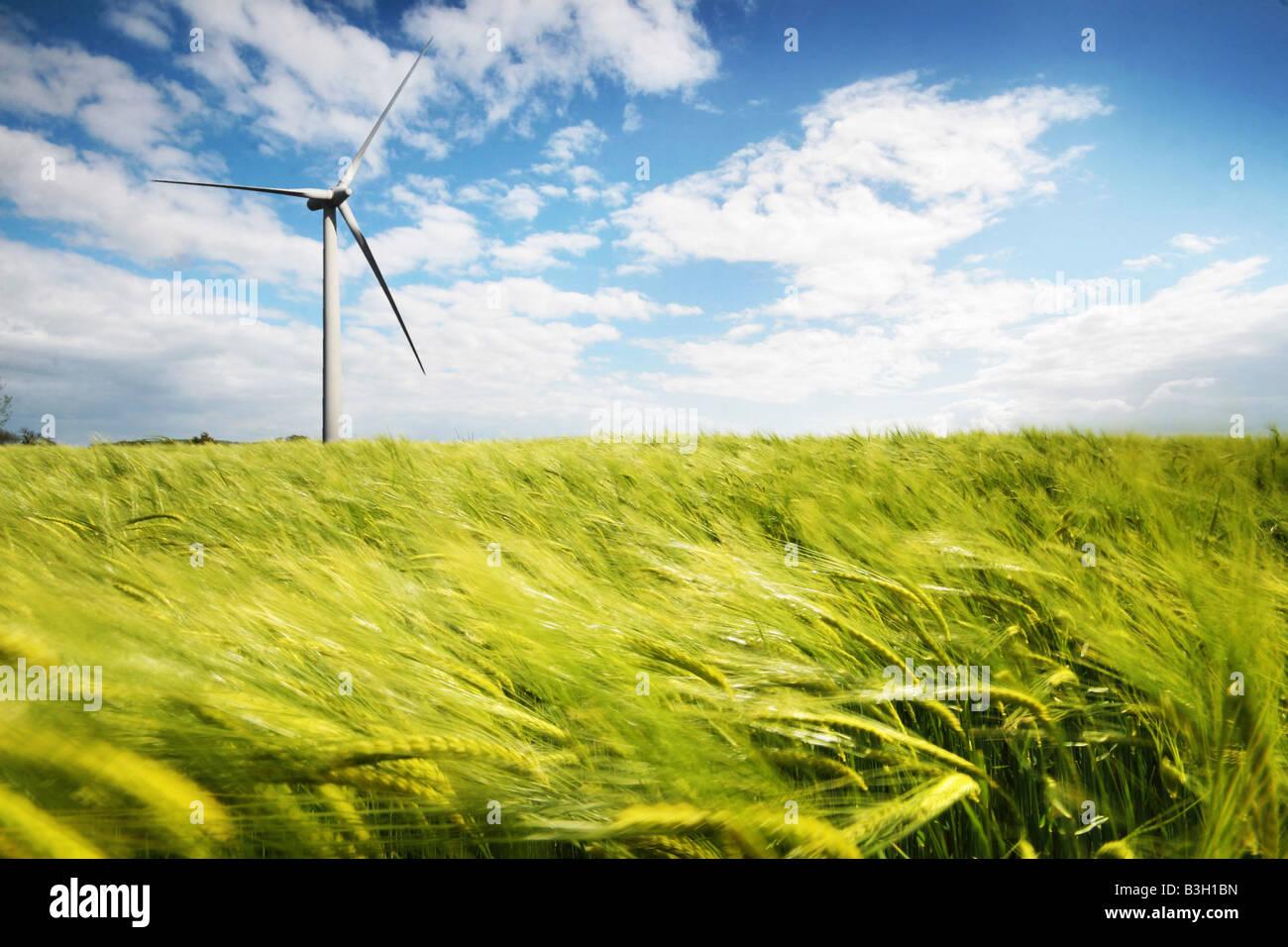 Windkraftanlage in einem Weizenfeld Stockbild