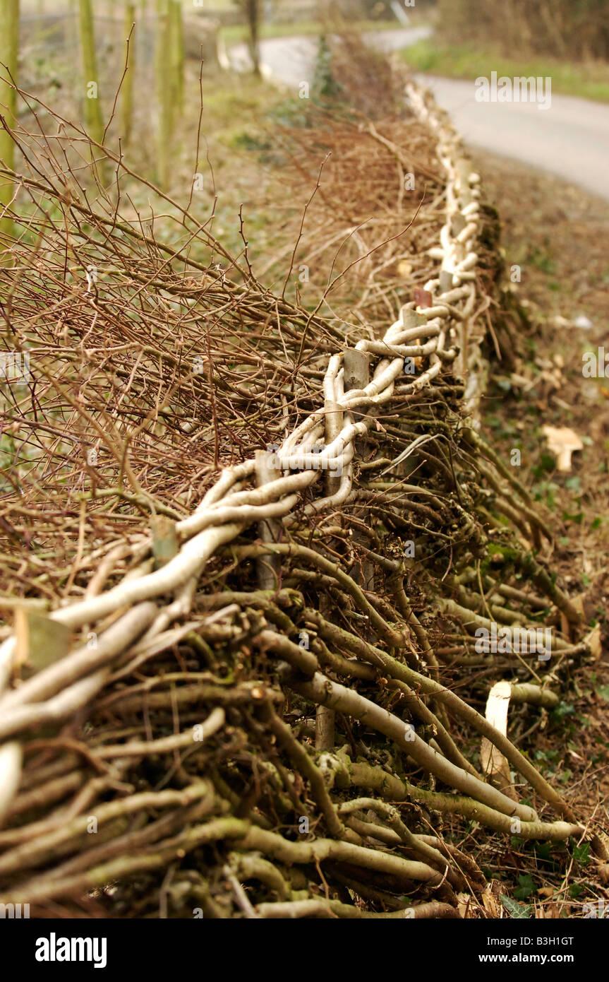 Zaun Gemacht Von Der Aste Und Zweige In Den Forest Of Dean England