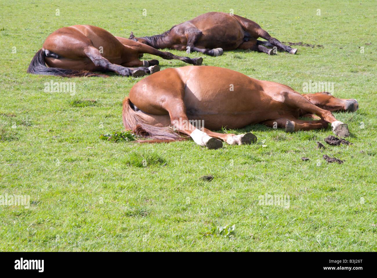 pferd schläft mit frau