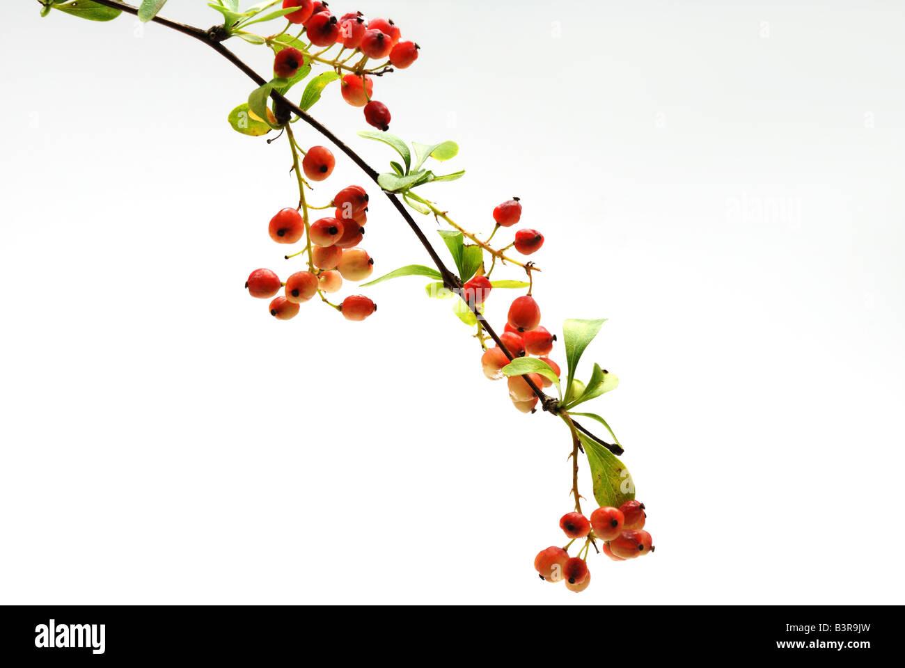 rote Früchte Stockbild
