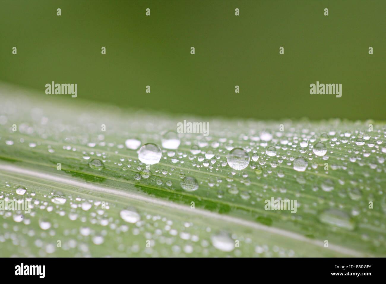 Nahaufnahme von Wassertropfen auf der Blattoberfläche Stockbild