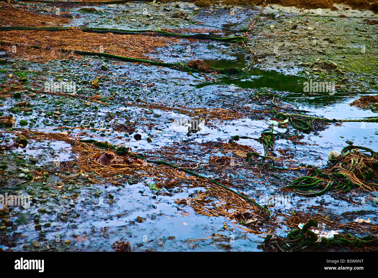 bei Ebbe Landschaft Meeresboden Ile de Ouessant Brittany France Stockbild