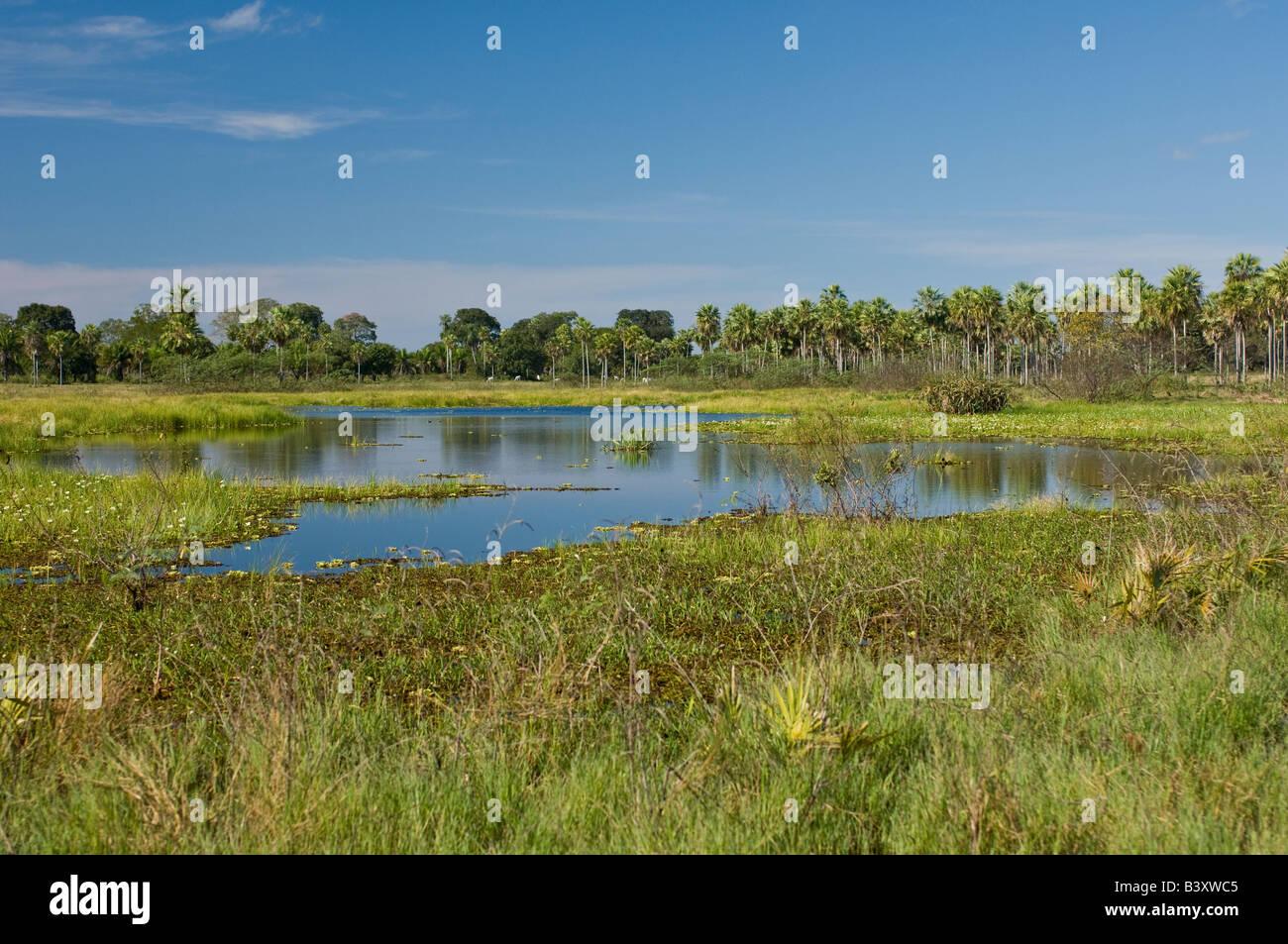 Kleiner See an der Transpantaneira Straße im Pantanal Mato Grosso do Sul Brasilien Stockfoto