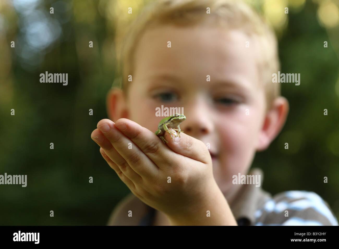 Kleiner Junge hält kleine Laubfrosch Stockfoto