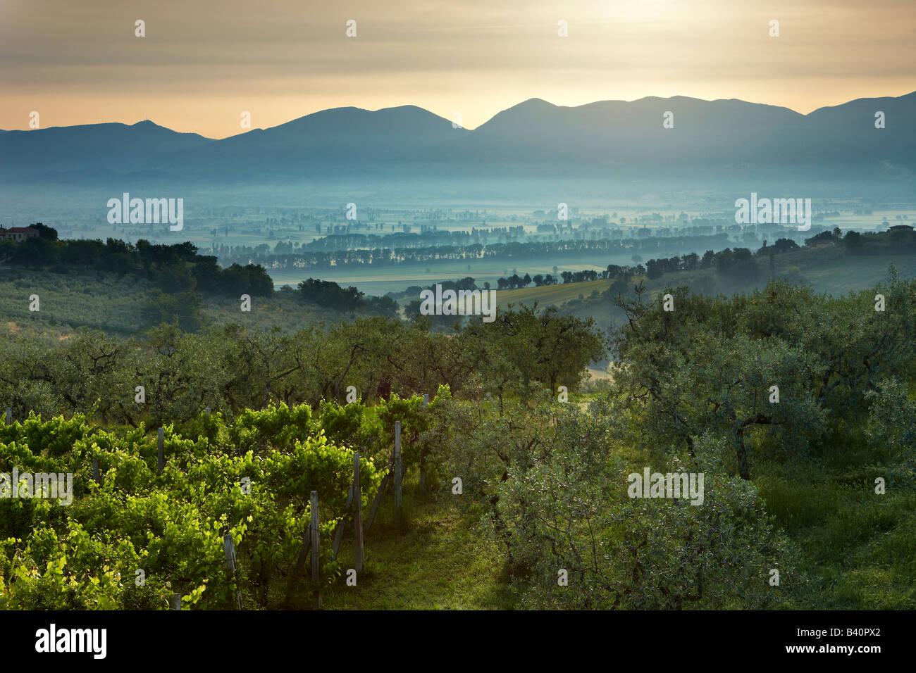 ein Weinberg mit Blick auf das Val di Spoleto in der Nähe von Montefalco, Umbrien, Italien Stockbild