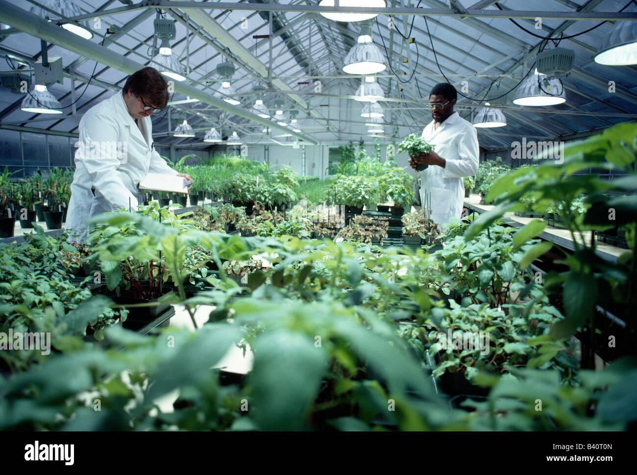 Wissenschaftler arbeiten im Gewächshaus bei einer Forschungs- und Entwicklungseinrichtung für ein Chemieunternehmen, Stockbild