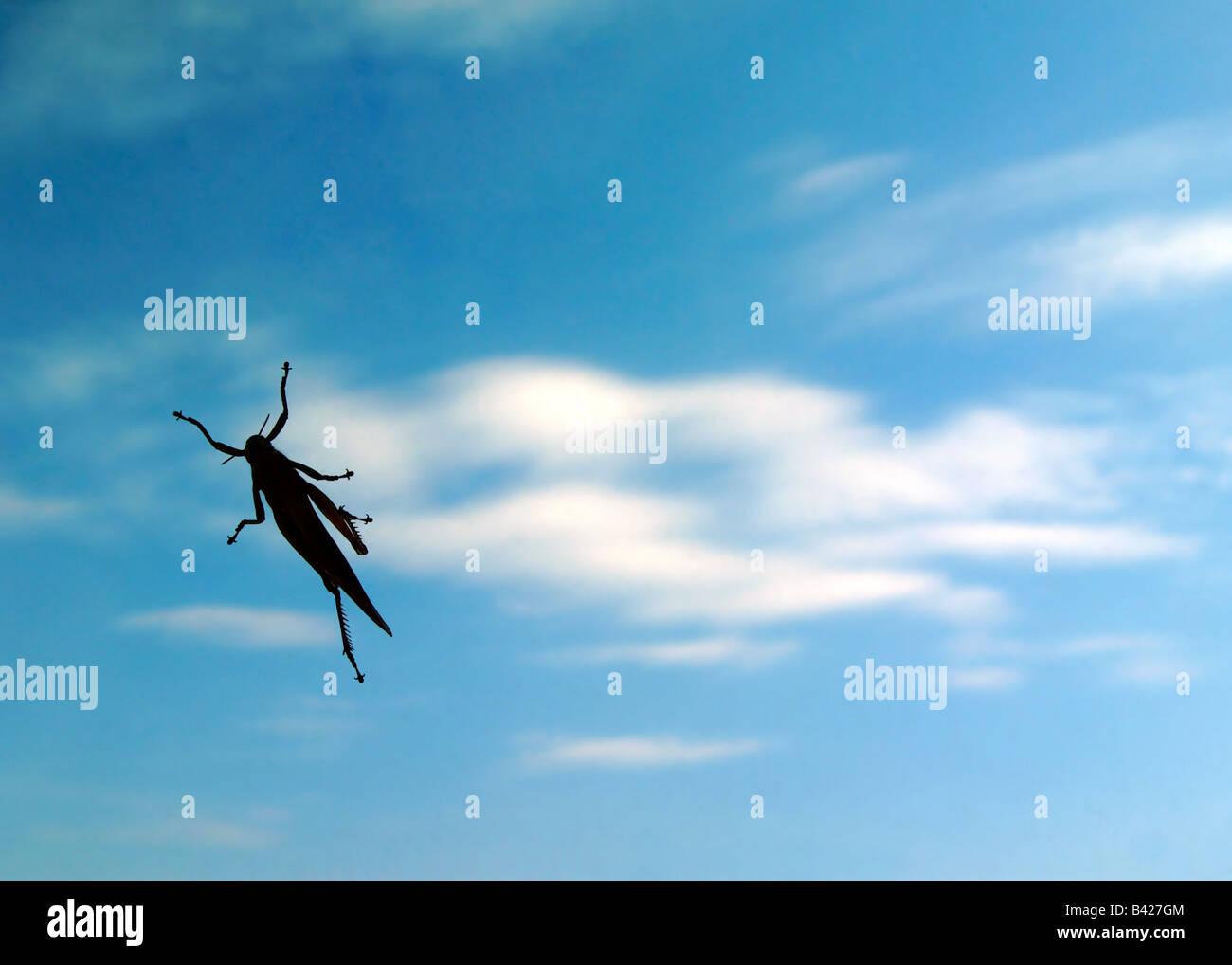 Grasshopper in den Himmel Stockbild