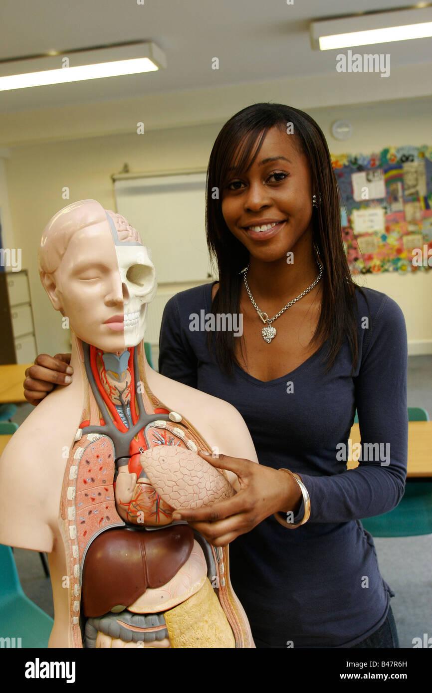 Studentin mit Modell des menschlichen Körpers zeigen, Organe, Sixth ...