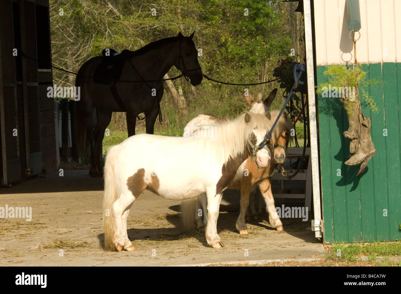 Hübsches Cowgirl Im Stall Gefickt