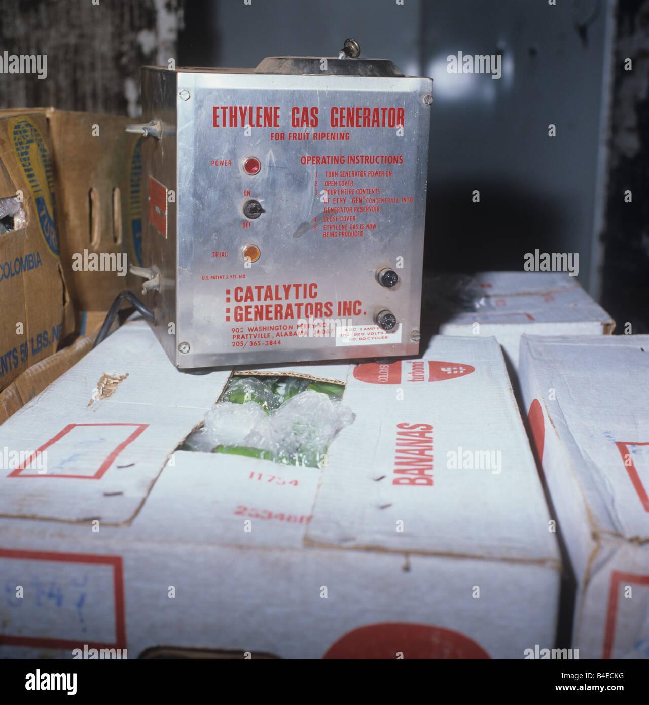 Ethylen-Gas-Generator in Bananenblättern speichern zur Reifung und Lagerung von importierten Früchten Stockbild