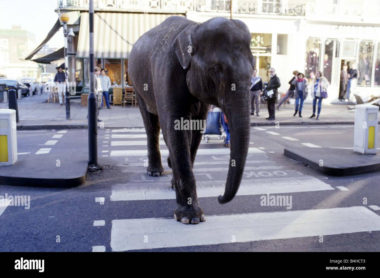 Gerry Cottle s Circus am Camden Lock in London Rani der indische Elefant beim Überqueren der Straße Dezember Stockbild