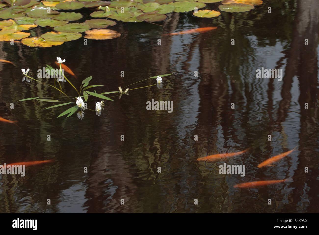 fische gartenteich vermehrung