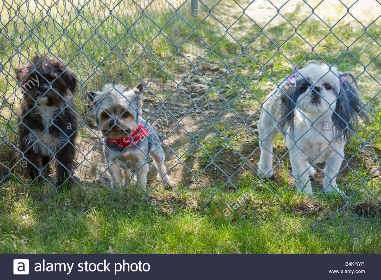 Schön Maschendrahtzaun Für Hunde Ideen - Der Schaltplan - triangre.info