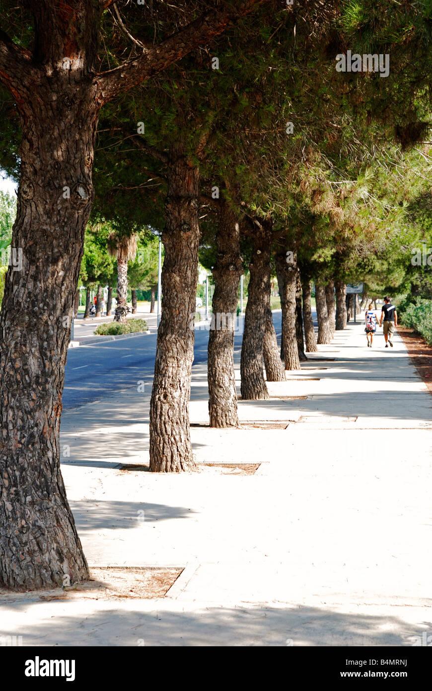 eine Reihe von Kiefern auf dem Bürgersteig in Salou, Spanien, bietet einige Schatten für Fußgänger Stockbild