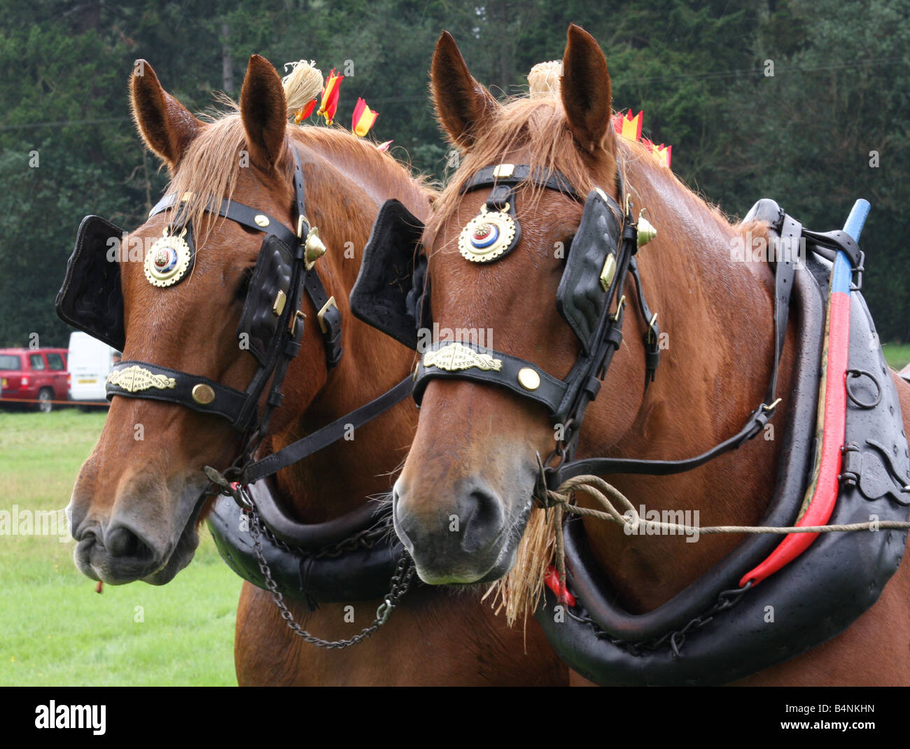 Horse Brasses Stockfotos & Horse Brasses Bilder - Alamy