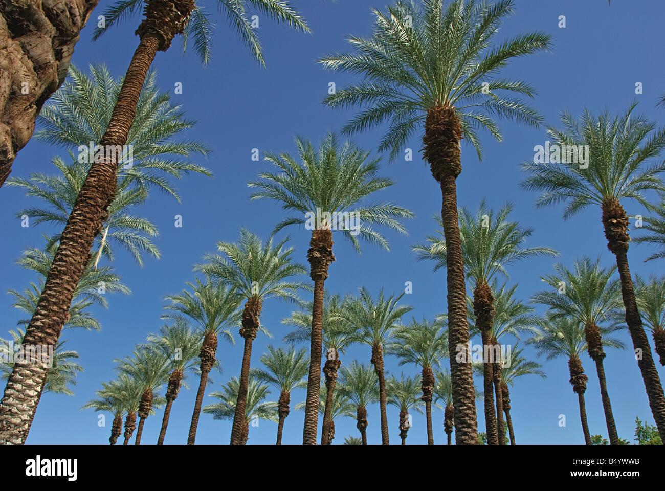 27 Palmen Kalifornien