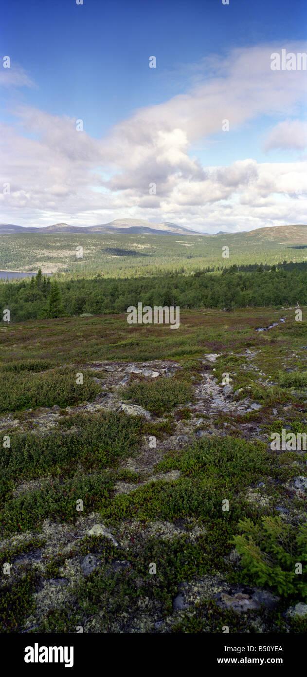 Töfsingdalen, ein Nationalpark im Rogen, Schweden. Stockbild