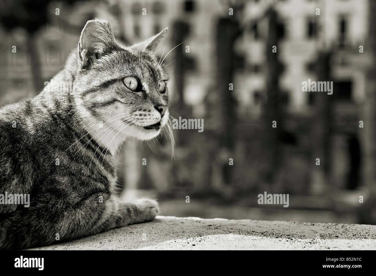 The Cat Empire Stockfotos & The Cat Empire Bilder - Alamy