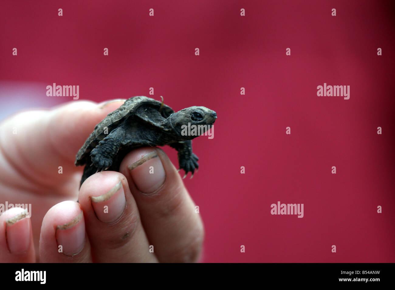 Niedlich Baby Meeresschildkröte Färbung Seite Fotos ...