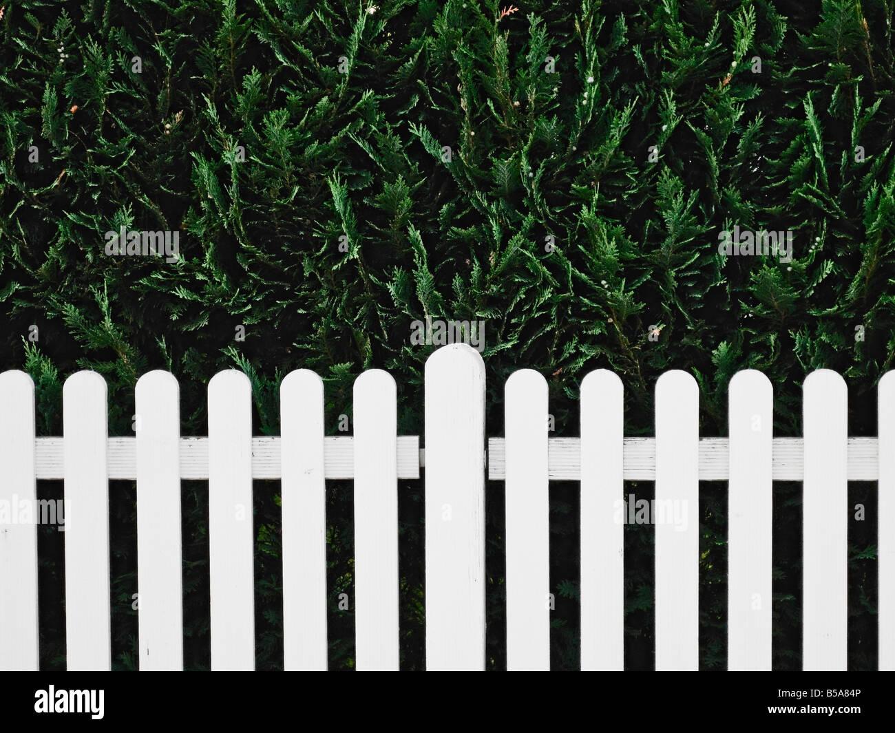 Weißer Zaun und Hecke Stockfoto Bild Alamy