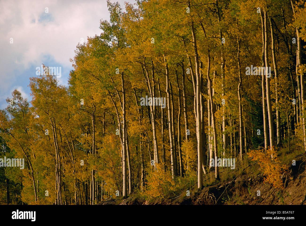 Bäume in herbstlichen Farben Stockbild