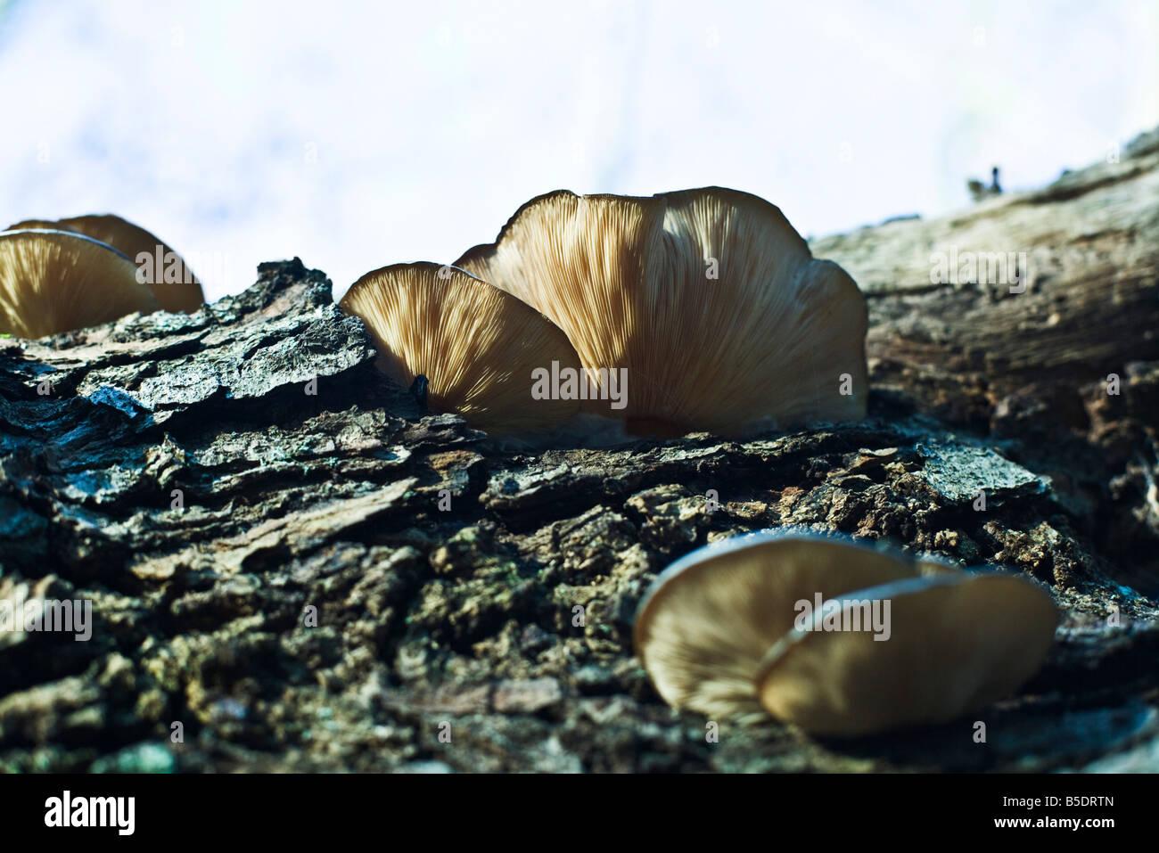 mycology stockfotos mycology bilder alamy. Black Bedroom Furniture Sets. Home Design Ideas