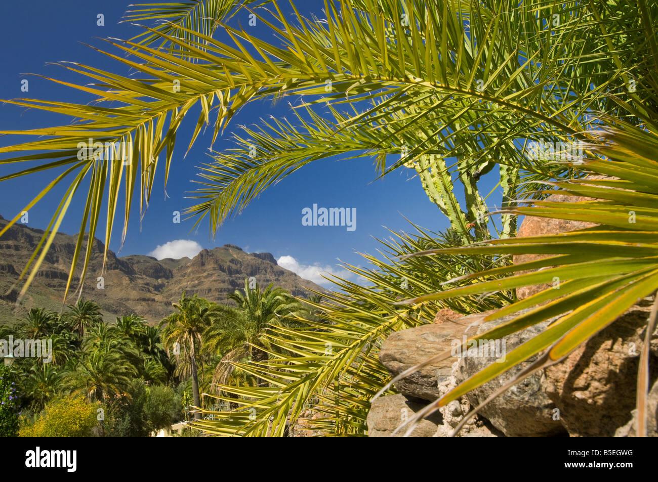 Eine sonnige natürliche Oase mit Palmen in der Nähe von Fataga, in den Bergen von Gran Canaria Kanaren Stockbild