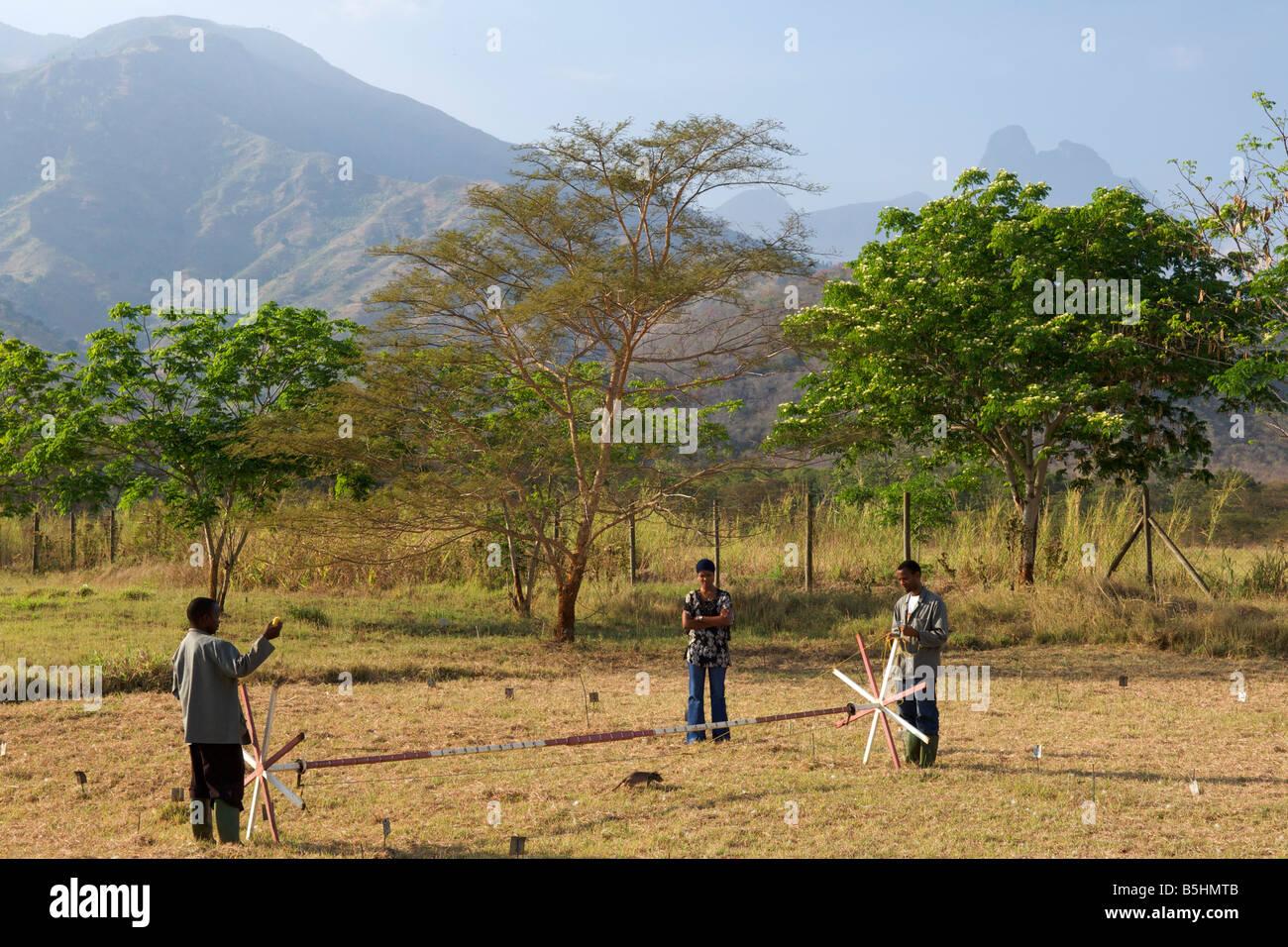 Ausbildung von Held Ratten vor Ort durch die Organisation von APOPO, TNT in Blindgänger zu erkennen. Stockbild