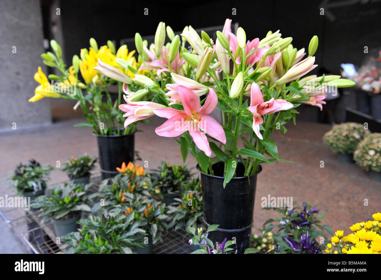 Lilien für den Verkauf in einem Outdoor-Blumenmarkt Stockbild