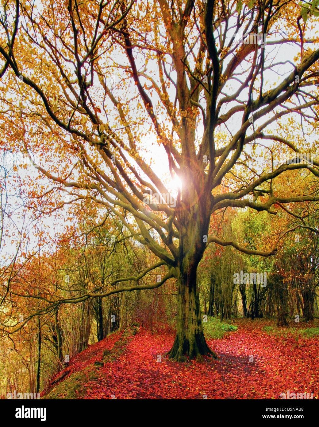 GB - GLOUCESTERSHIRE: Herbst Szene am Crickley Hill Country Park Stockbild