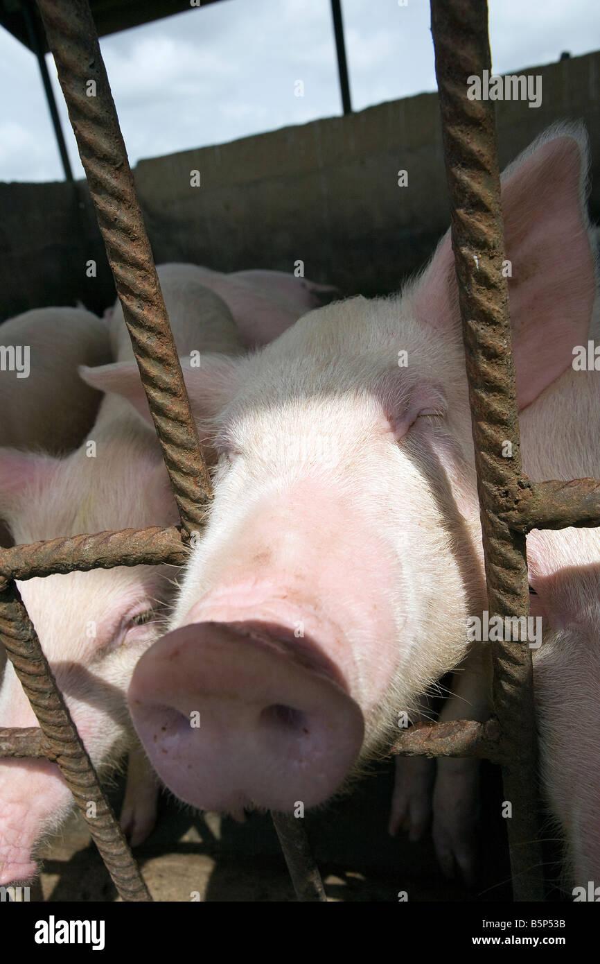 Berühmt Garten Schwein Draht Ideen - Elektrische Schaltplan-Ideen ...