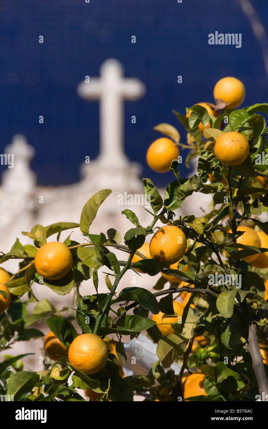 Orange Obstbau vor blau gekachelten Kuppel des Museum of Fine Arts oder Museo de Bellas Artes in Valencia, Spanien Stockbild