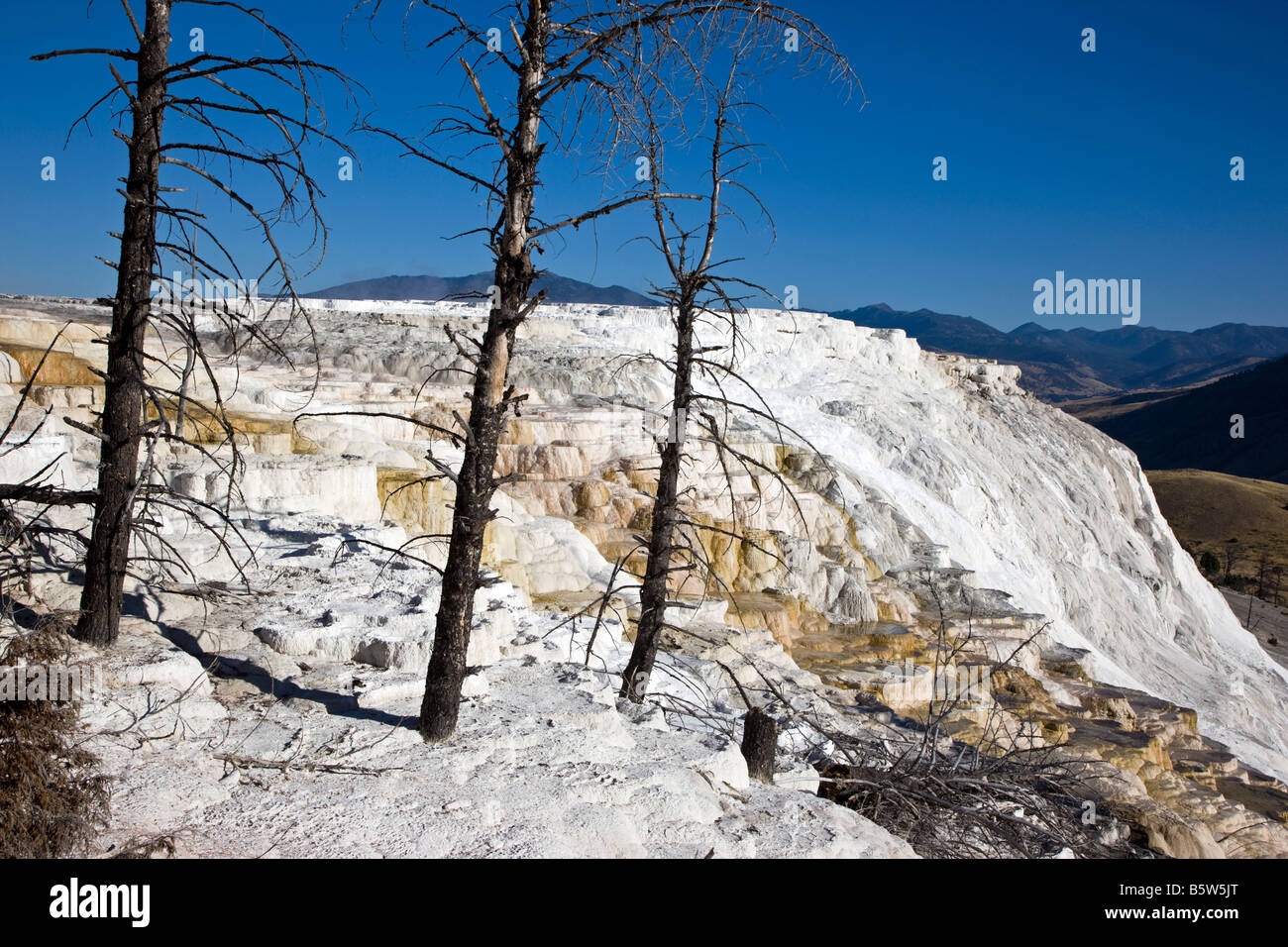 Kanarischen Frühling, Mammoth Hot Springs, Yellowstone-Nationalpark; Wyoming; USA; Stockbild